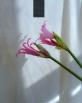 ABTIRA GARDEN Bloom Nemlendirici | vücut losyonu