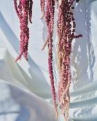 ABTIRA GARDEN Bubbles | botanik şampuan